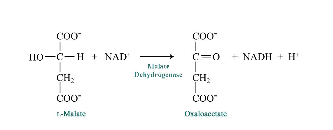 Kevin Ahern's Biochemistry
