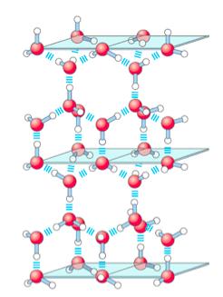 Lehninger's Principles of Biochemistry, 5E