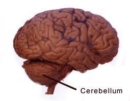 cerebrumfunction.net