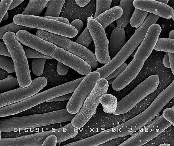 http://www.livescience.com/3092-human-gut-loaded-bacteria-thought.html