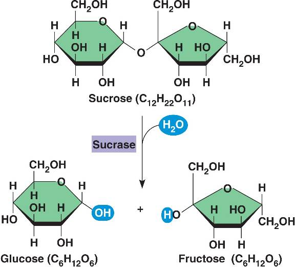 http://patakaa.blogspot.com/2012/01/sucrose-enzyme.html