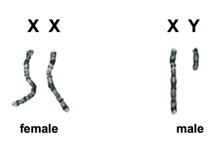 http://scitechconnect.elsevier.com/sex-genes-y-chromosome-future-of-men/