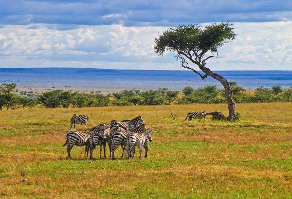 http://www.bioexpedition.com/savanna-biome/