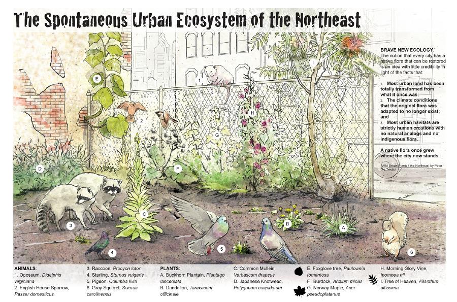 http://andrewleachprojects.com/Urban-Ecosystem