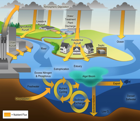 http://www.wri.org/our-work/project/eutrophication-and-hypoxia/sources-eutrophication