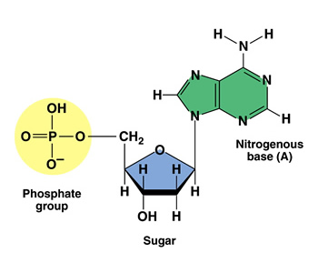 http://watson-int.com/carbohydrate-and-nucleotide/