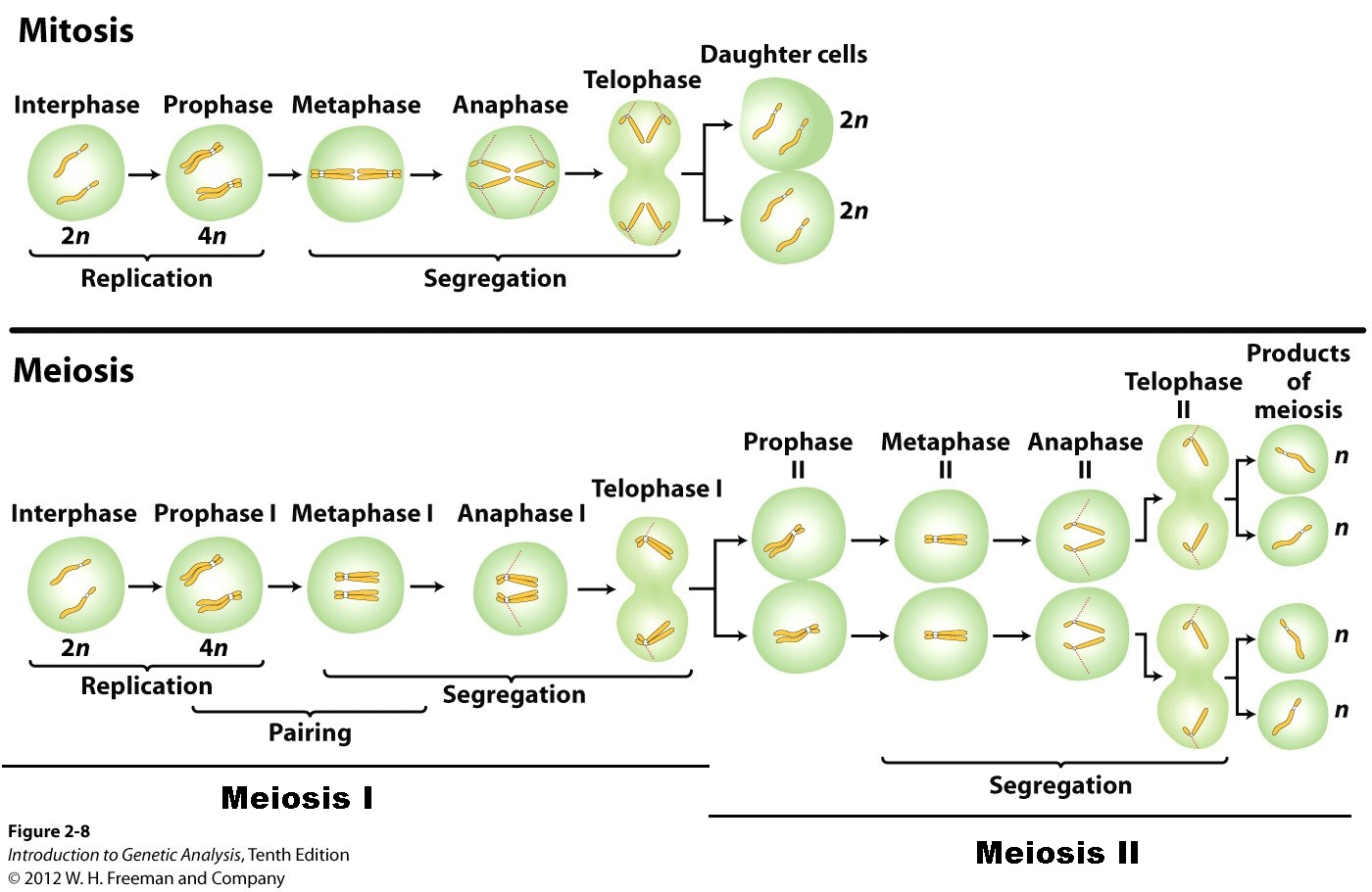 http://biology-forums.com/gallery/2137_21_04_12_2_19_02.jpeg